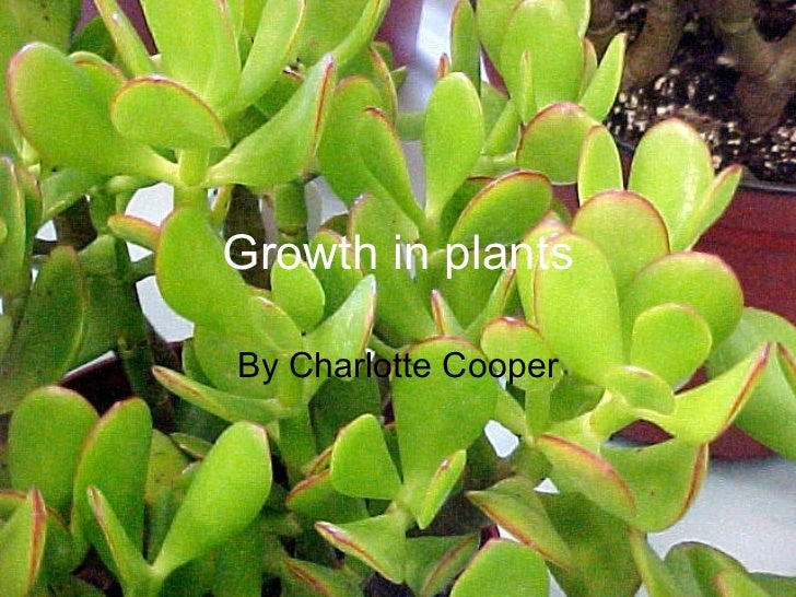 Growth in plants By Charlotte Cooper