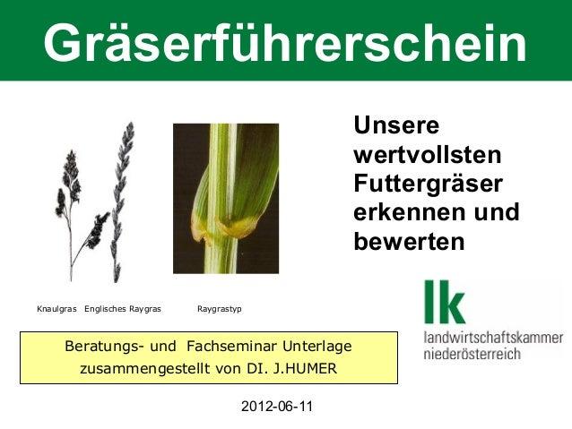 Gräserführerschein Unsere wertvollsten Futtergräser erkennen und bewerten Knaulgras  Englisches Raygras  Raygrastyp  Berat...
