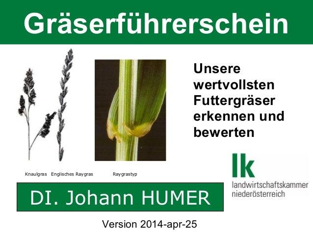 Gräserführerschein Knaulgras Englisches Raygras Raygrastyp DI. Johann HUMER Unsere wertvollsten Futtergräser erkennen und ...