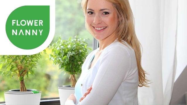 Das Leben vieler Zimmerpflanze ist kurz  Beim Kauf  Zimmerpflanze ist  noch saftig grün  3 Monate später  Blätter sind bra...