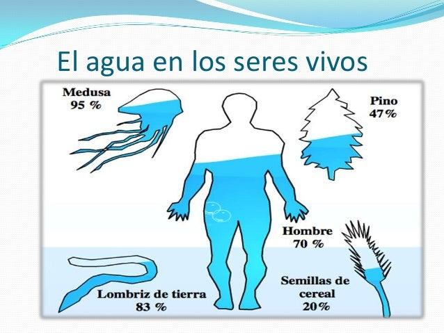 Resultado de imagen de El agua en los organismos vivos