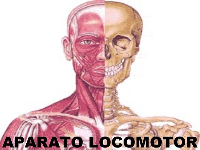 APARATO LOCOMOTOR