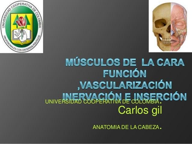 UNIVERSIDAD COOPERATIVA DE COLOMBIA.                     Carlos gil              ANATOMIA DE LA CABEZA.