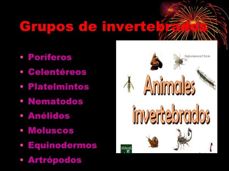 Grupos de invertebrados