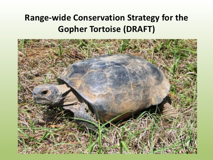 Range-wide Conservation Strategy for the       Gopher Tortoise (DRAFT)