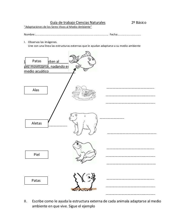 Guía de trabajo adaptaciones i ciencias naturales                             2º básico