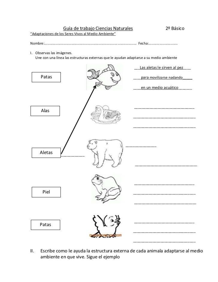 Guía de trabajo Ciencias Naturales                             2º Básico<br />                                 ...