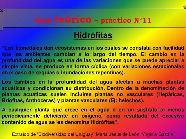 """Guía teórico – práctico N°11 Hidrófitas """"Los humedales don ecosistemas en los cuales se constata con facilidad que los amb..."""