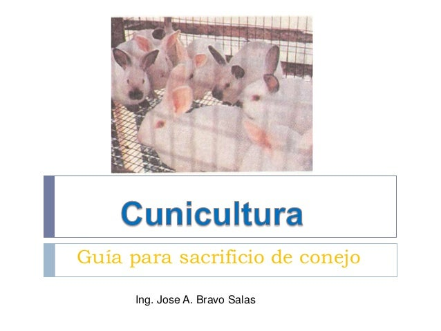 Guía para sacrificio de conejo Ing. Jose A. Bravo Salas