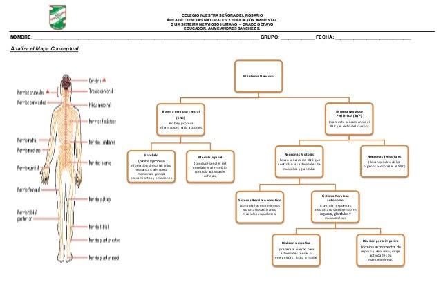 Guía s. nervioso humano