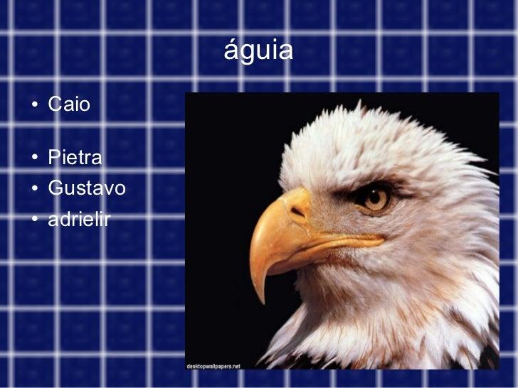 águia <ul><li>Caio  </li></ul><ul><li>Pietra </li></ul><ul><li>Gustavo </li></ul><ul><li>adrielir </li></ul>