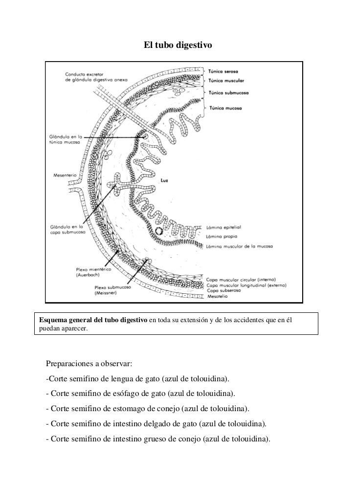 El tubo digestivoEsquema general del tubo digestivo en toda su extensión y de los accidentes que en élpuedan aparecer.  Pr...