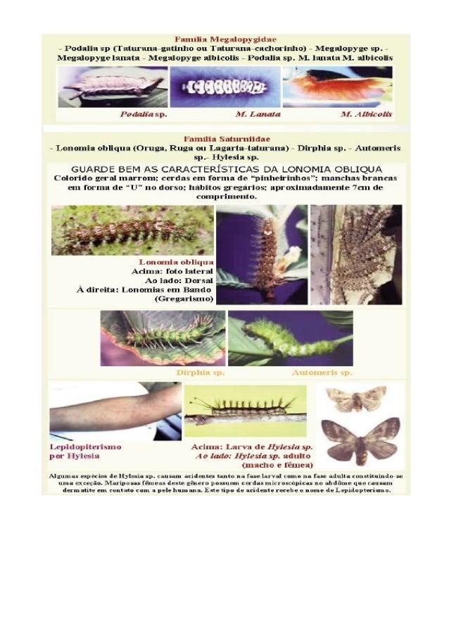 Anfíbios Sapos, rãs e peperecas Dentre os anfíbios anuros podemos distinguir 3 categorias de animais, baseadas no seu aspe...