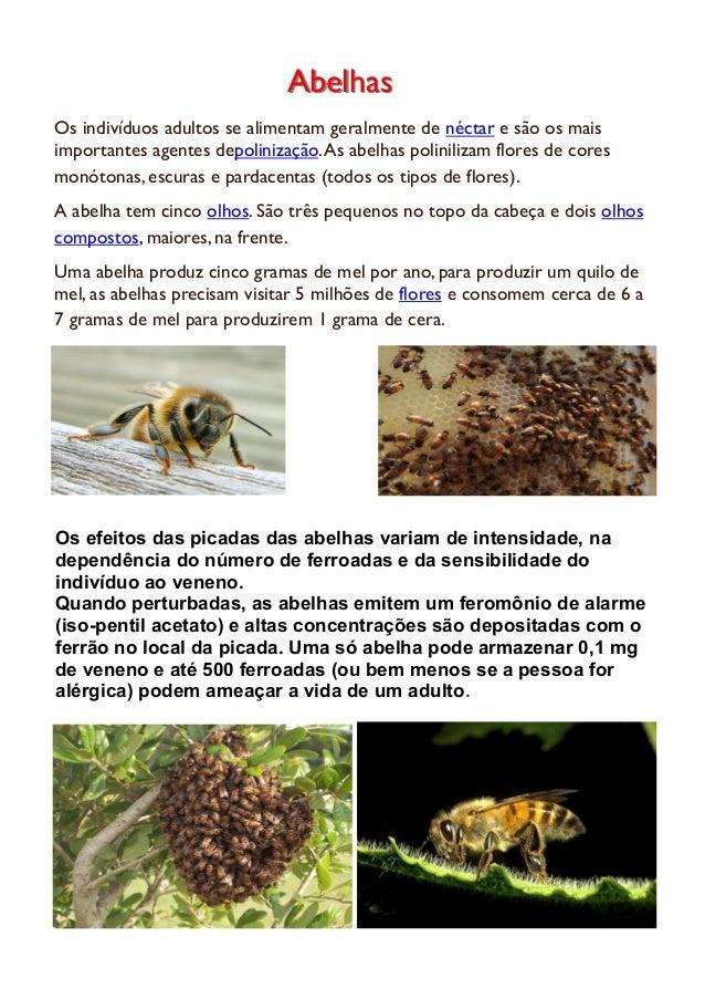 Locais de atuação do veneno das abelhas:Locais de atuação do veneno das abelhas: COMO OVENENO SE MANIFESTA FORTE DOR, NOS ...