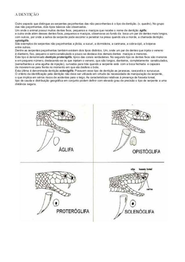 A DENTIÇÃO Outro aspecto que distingue as serpentes peçonhentas das não peconhentas é o tipo de dentição. (v. quadro). No ...
