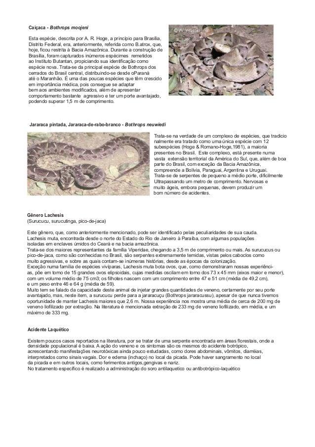 Caiçaca - Bothrops moojeni Esta espécie, descrita por A. R. Hoge, a princípio para Brasília, Distrito Federal, era, anteri...