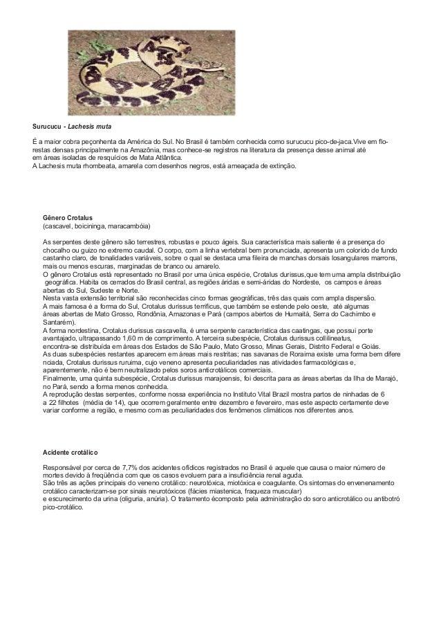 Surucucu - Lachesis muta É a maior cobra peçonhenta da América do Sul. No Brasil é também conhecida como surucucu pico-de-...