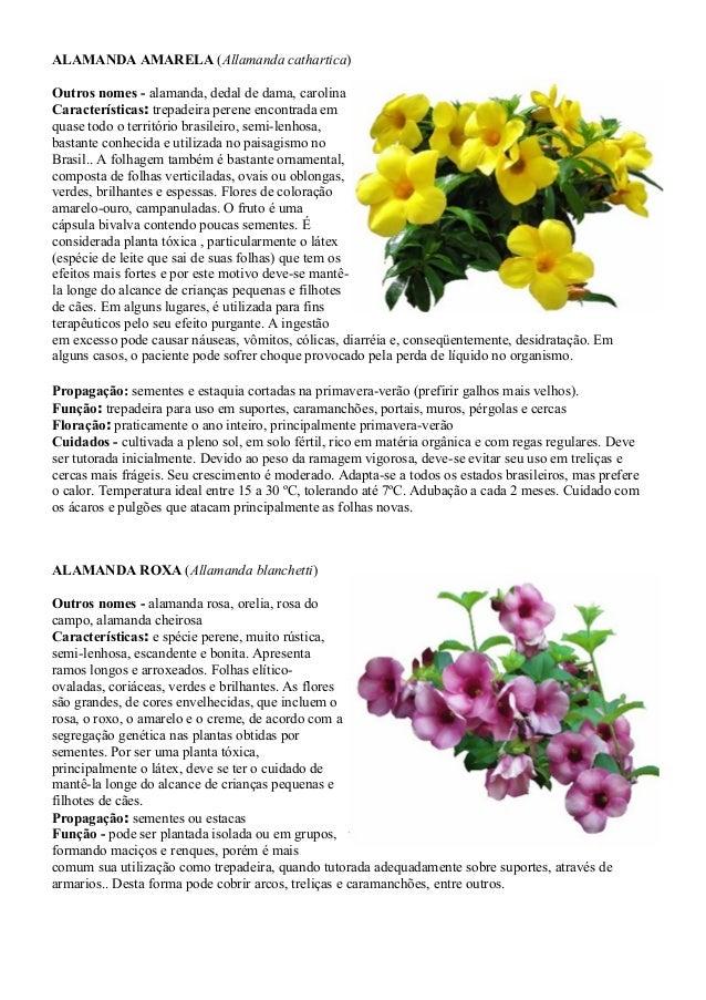 Guia de campo plantas ornamentais