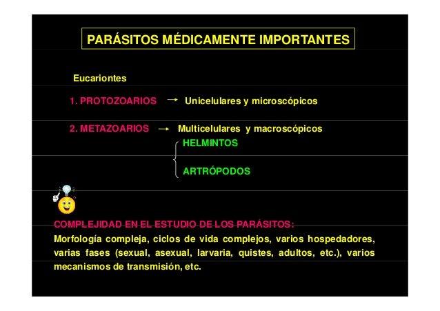 Los parásitos que viven en nosotros y sus síntomas