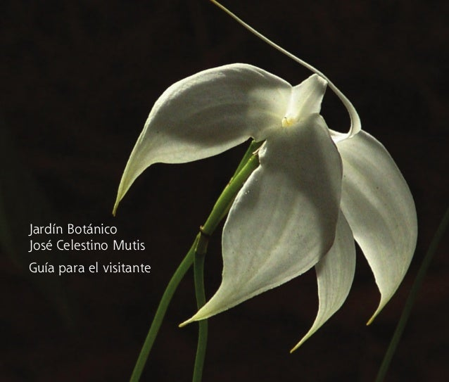 Jardín Botánico José Celestino Mutis Guía para el visitante proyecto completo abril 16.indd 1 09/05/2008 10:02:11 a.m.