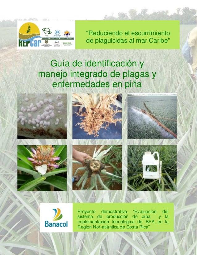 """Guía Identificación y MIP  """"Reduciendo el escurrimiento de plaguicidas al mar Caribe""""  Guía de identificación y manejo int..."""