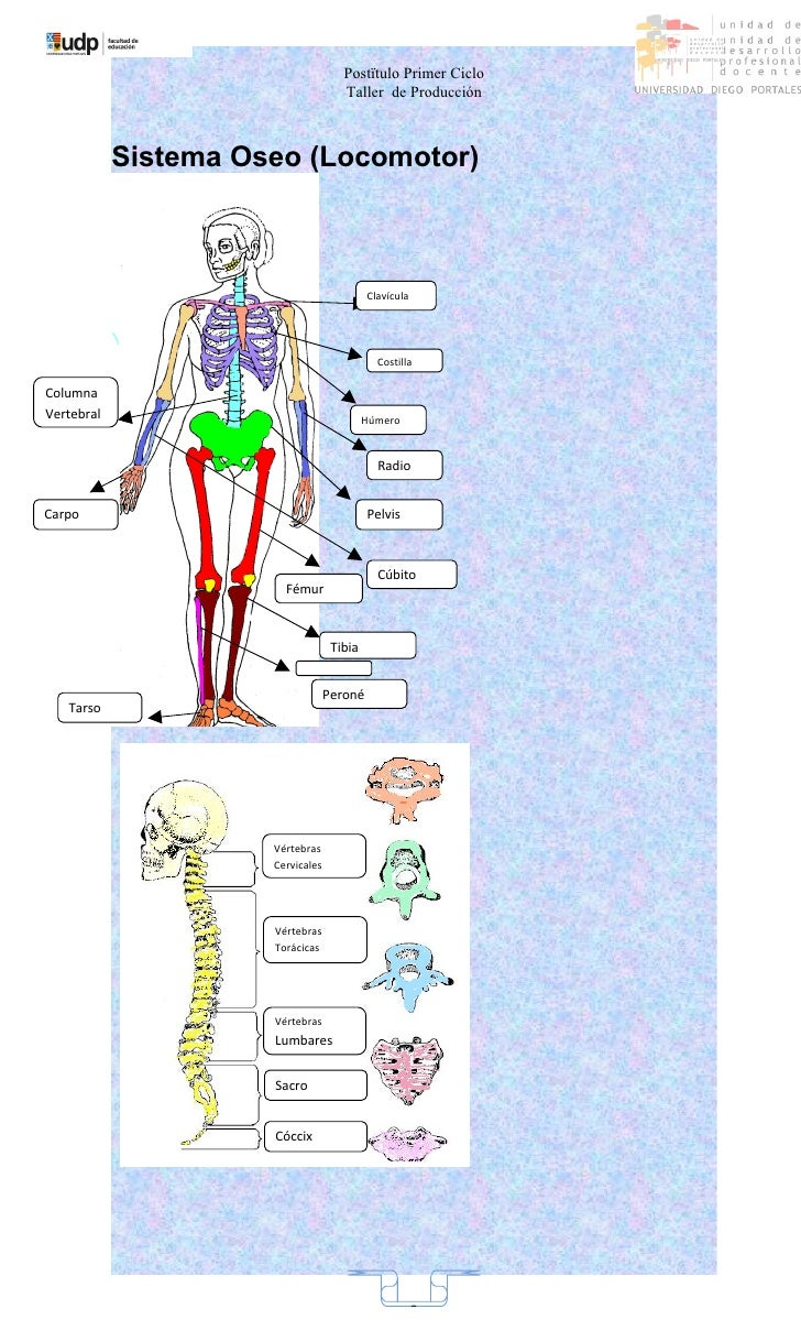 Guia sistema nervioso.