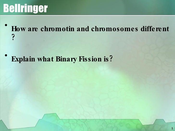 Bellringer <ul><li>How are chromotin and chromosomes different ? </li></ul><ul><li>Explain what Binary Fission is? </li></ul>