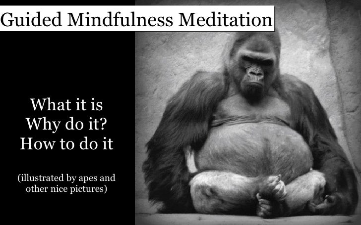 What it is Why do it? How to do it (illustrated by apes and other nice pictures) Guided Mindfulness Meditation