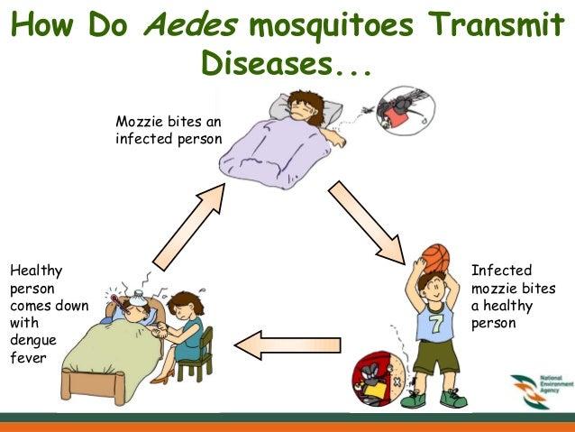 mosquito larvae clipart