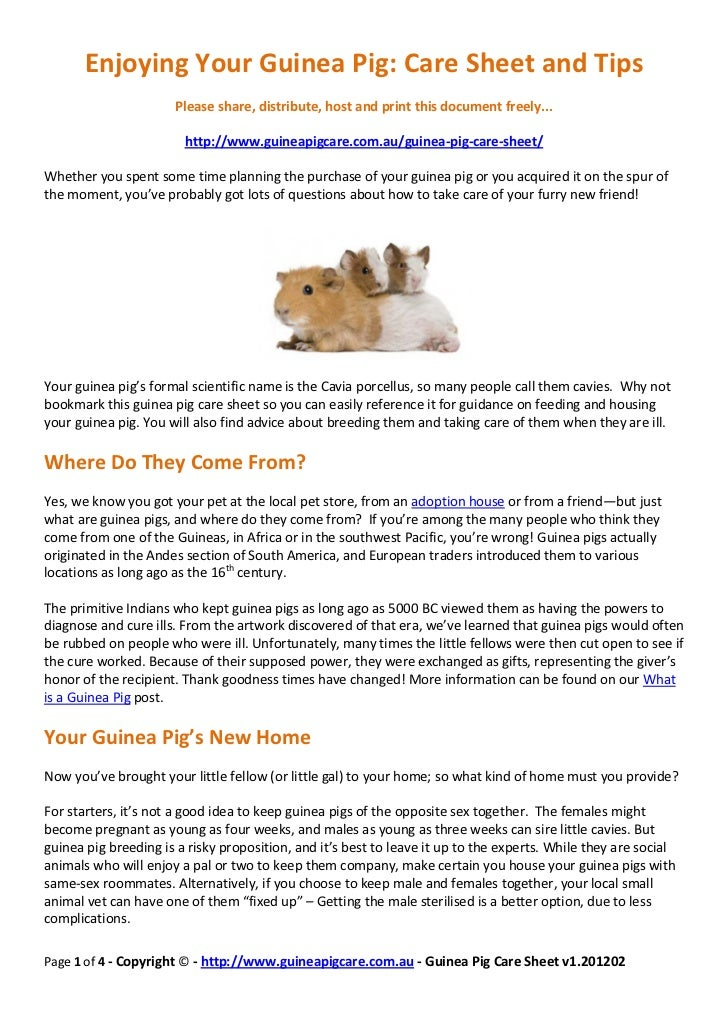 guinea pig care sheet