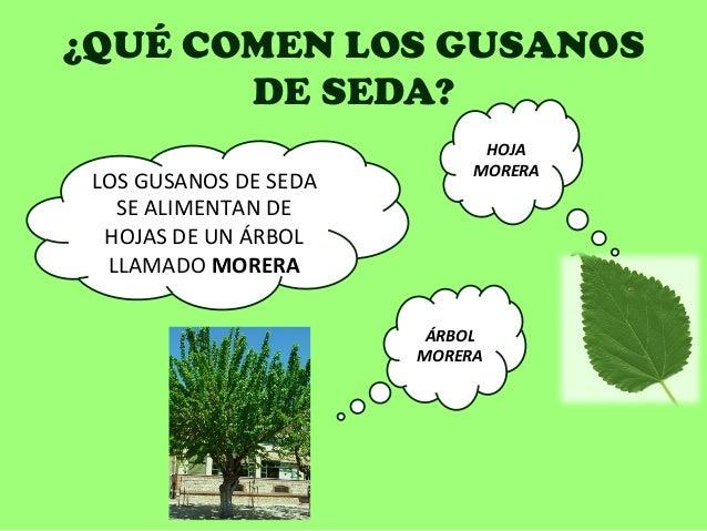 Las enfermedades de las plantas llamado por las setas por los parásitos