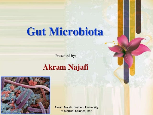 Akram Najafi, Bushehr University of Medical Science, Iran Gut Microbiota Presented by: Akram Najafi