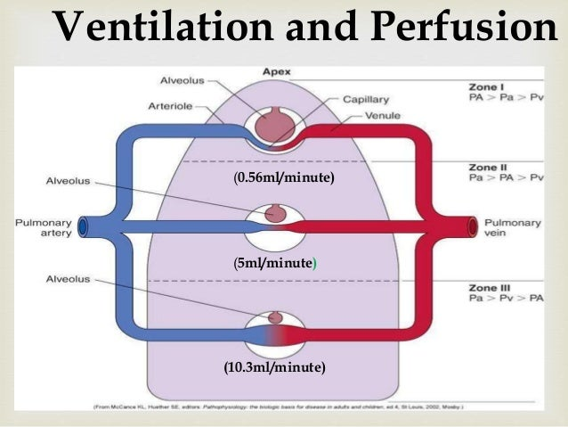 Ventilation and Perfusion in different zones of lungs.