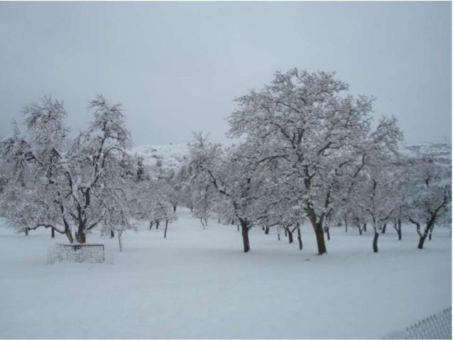 Habemus....nieve