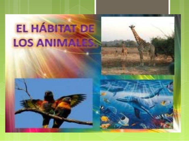 ¿Qué son los hábitats?  Así como tú tienes un hogar los animales también necesitan un lugar donde vivir. En la naturaleza...