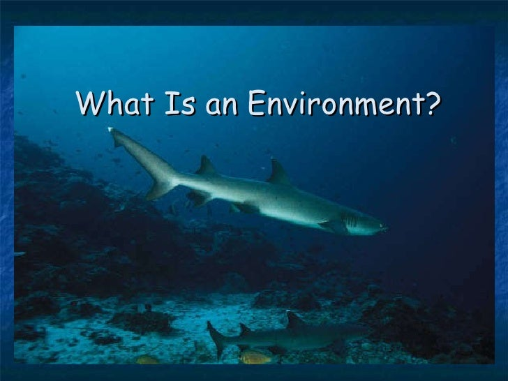 What Is an Environment?