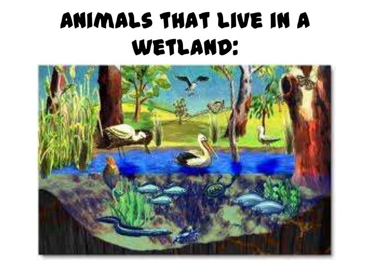 What types of animals live in wetlands?