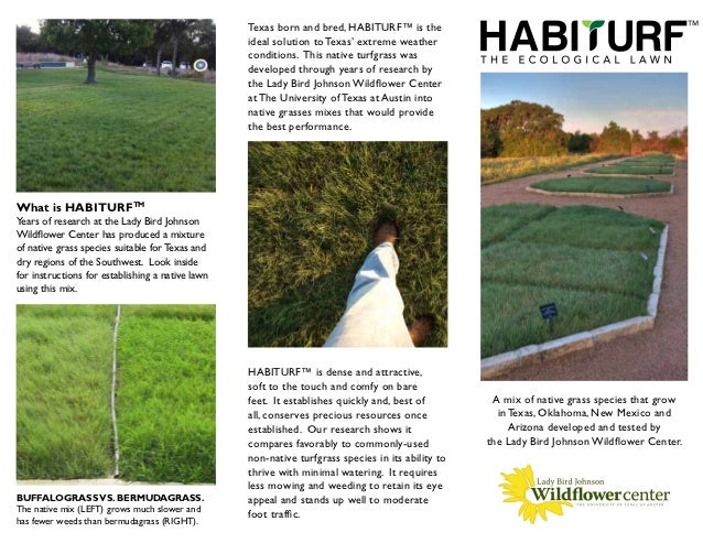 HabiTurf: the Ecological Lawn - Lady Bird Johnson Wildflower Center
