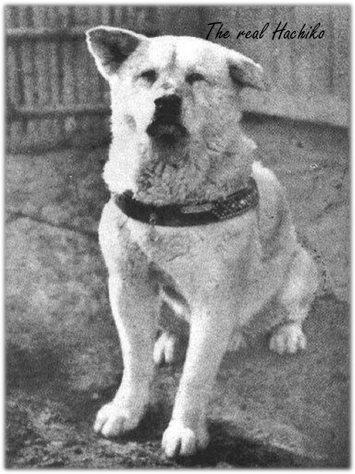 The real Hachiko<br />