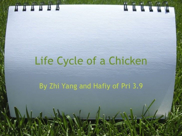 Life Cycle of a Chicken By Zhi Yang and Hafiy of Pri 3.9