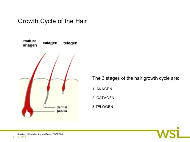 3/1/2013Academy of Hairdressing and Beauty TAFE WSI0Growth Cycle of the HairThe 3 stages of the hair growth cycle are:1. A...