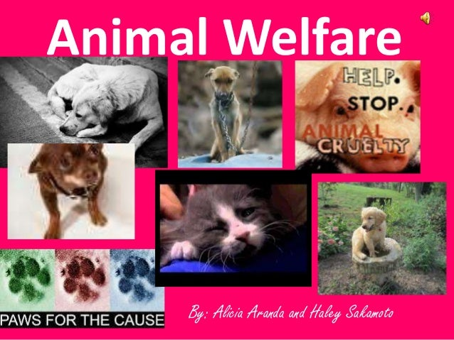 By: Alicia Aranda and Haley Sakamoto Animal Welfare