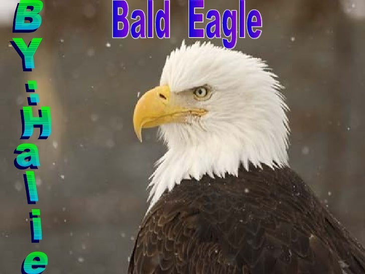 BY:Halie Bald  Eagle