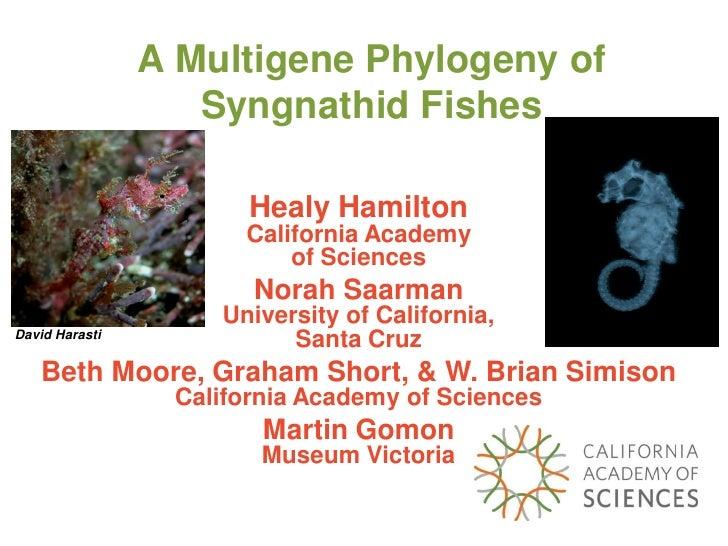 A Multigene Phylogeny of                    Syngnathid Fishes                         Healy Hamilton                      ...