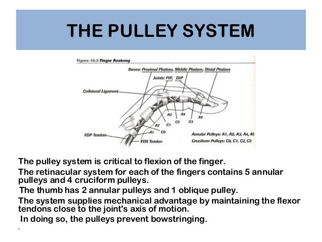 Pulleys Of Hand : Pulley driverlayer search engine