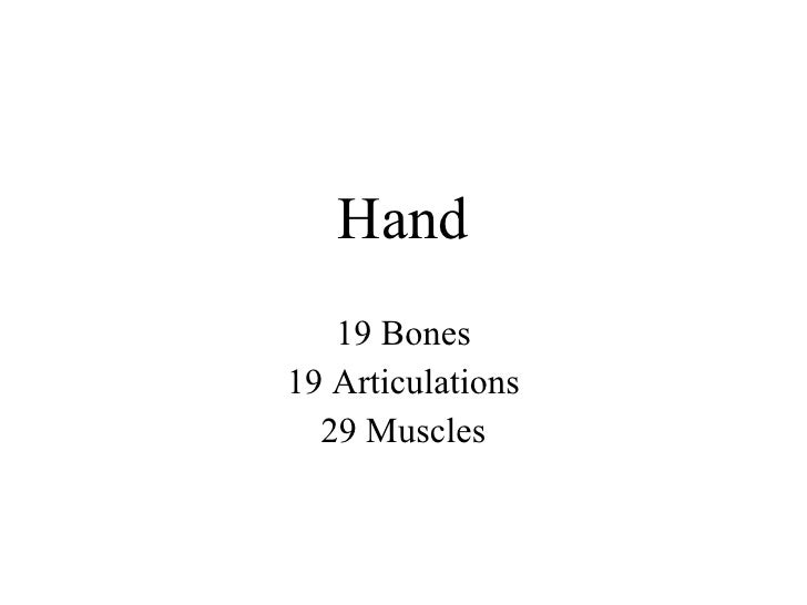 Hand 19 Bones 19 Articulations 29 Muscles