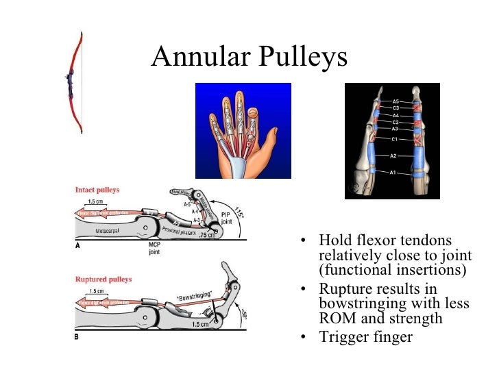 Pulleys Of Hand : Hand questions included not to post