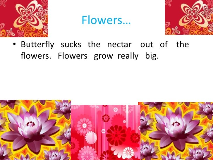 Flowers…<br />Butterfly   sucks   the   nectar    out   of    the  flowers.   Flowers   grow  really   big.<br />