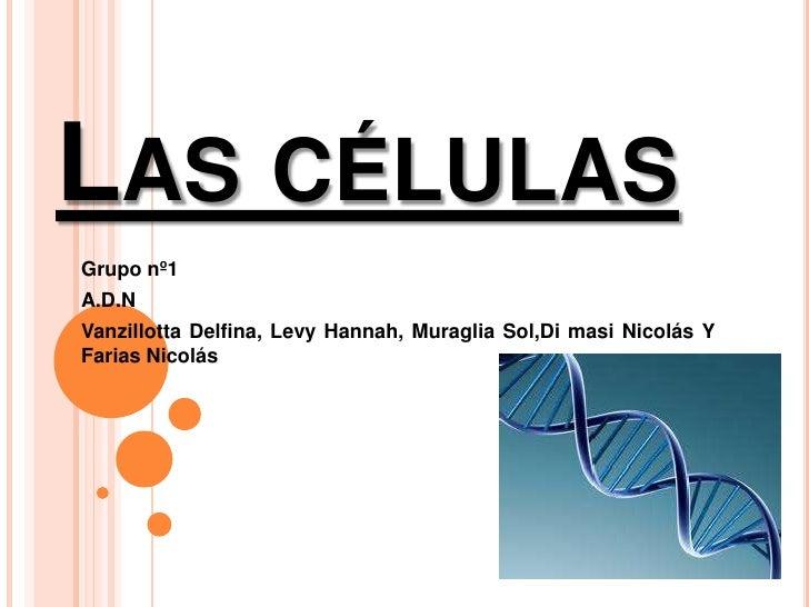 Las células<br />Grupo nº1<br />A.D.N <br />Vanzillotta Delfina, Levy Hannah, MuragliaSol,Di masi Nicolás Y Farias Nicolás...