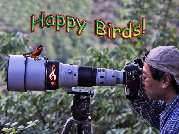 Happy birds (v.m.)